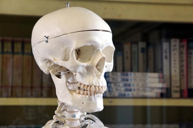 骨が退化してしまう原因を解説